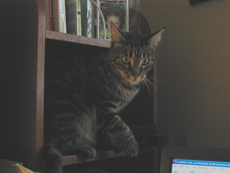 Roxy_on_desk_1